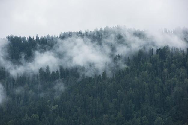 Zalesiony stok górski