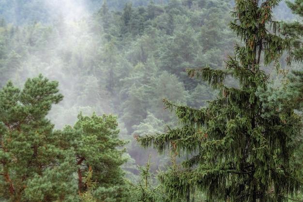Zalesiony widok gór w europie, mgliste wierzchołki drzew iglastych