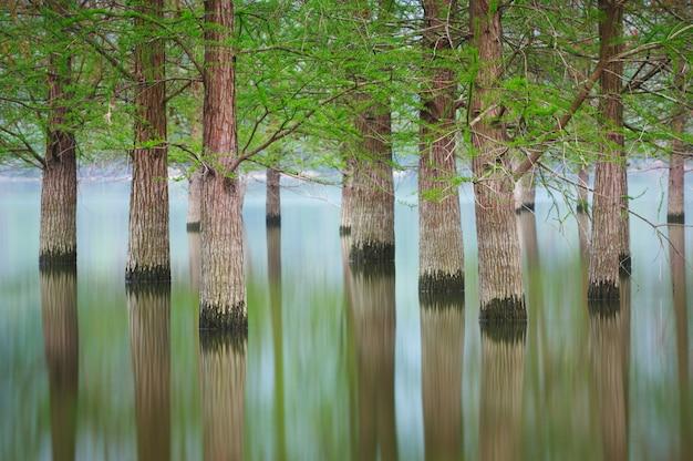 Zalewający drzewo krajobraz przy wiosną. gładka woda.