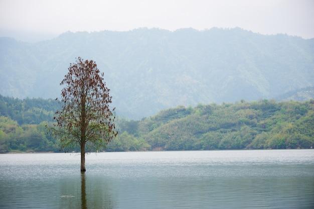 Zalewający samotny drzewo krajobraz przy wiosną. gładka woda.