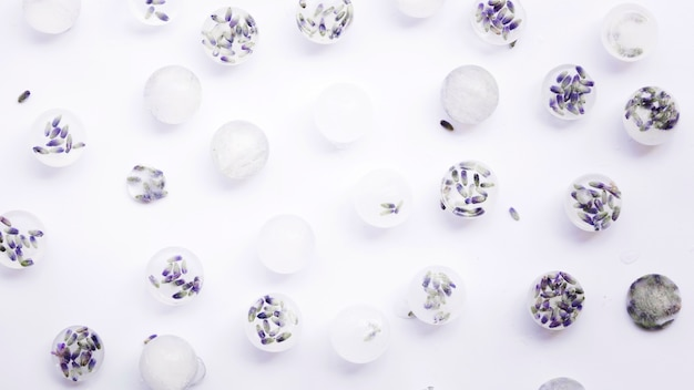 Zamarznięci kwiaty w kostkach lodu na białym tle
