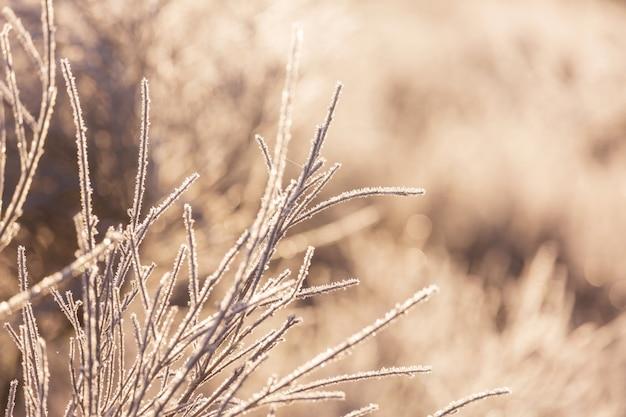 Zamarznięta późna jesień łąka z bliska. zimowe tło.