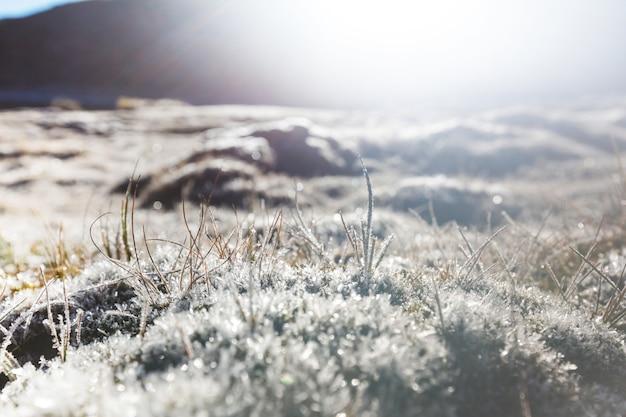 Zamarznięta późna jesień łąka z bliska. zimowy.