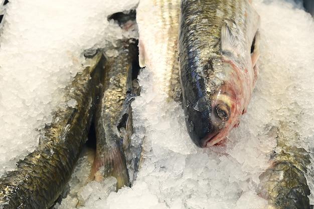 Zamarznięta ryba i owoce morza na lodzie
