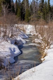 Zamarznięta rzeka zimą w lesie. słoneczny dzień. piękny zimowy krajobraz.