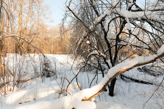 Zamarznięta rzeka zimą