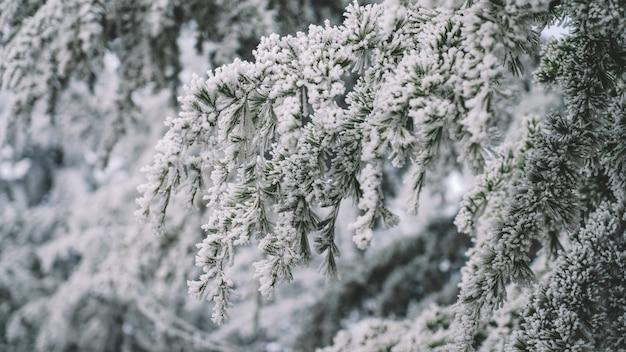 Zamarznięte drzewa i biały śnieg