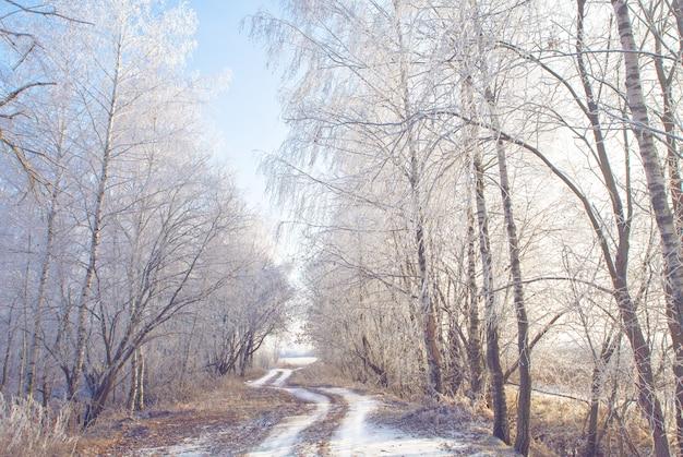 Zamarznięte drzewa na zimowej drodze i błękitne niebo w słoneczny dzień