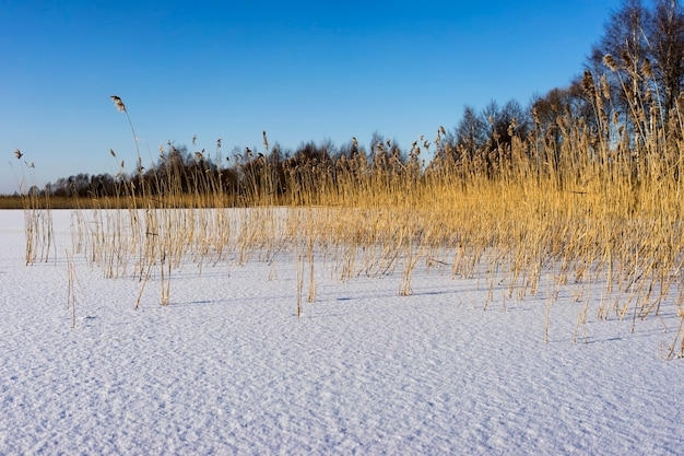 Zamarznięte jezioro i suche trzciny mroźny poranek zimą pod słońce