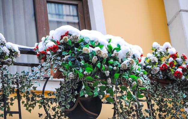 Zamarznięty kwiat w śniegu w dolmabahce pałac