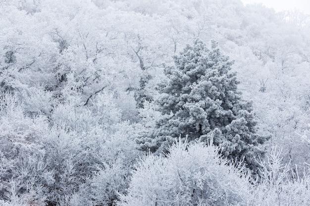 Zamarznięty las na chmurnym zima dniu w węgry
