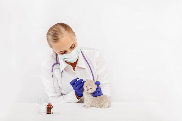 Zamaskowany lekarz weterynarii bada małego brytyjskiego kotka w klinice weterynaryjnej