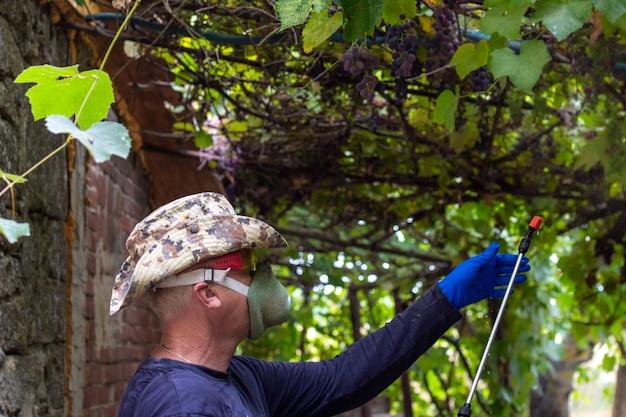 Zamaskowany rolnik traktuje winogrona roztworem z pasożytów