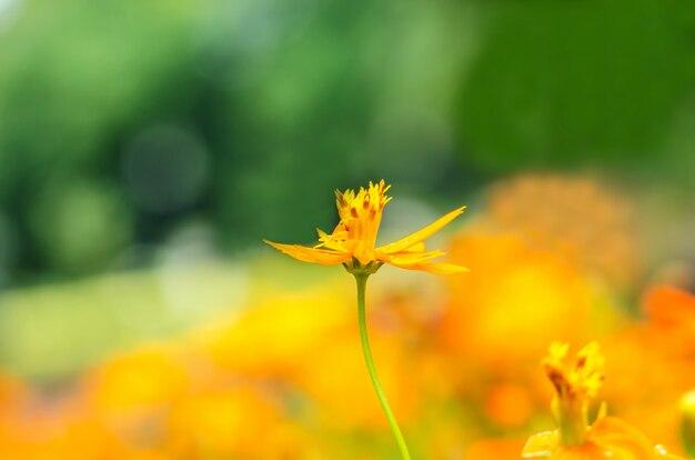 Zamazany kwiaty i tło tekstury abstrakt