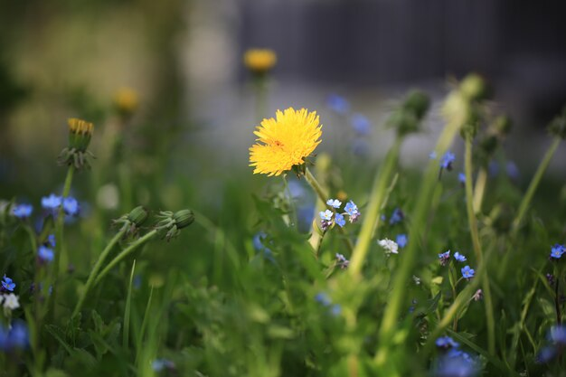 Zamazany kwiecisty tło łąki letni dzień