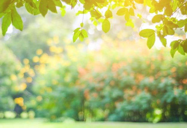 Zamazany park z bokeh światłem, natury tło