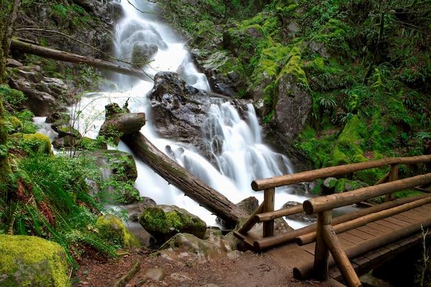 Zamazany ruchu strzał strumień i siklawy w dalekim lesistym terenie z footbridge w przedpolu
