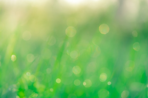 Zamazany świeży zielonej trawy pole. zielona trawa z bokeh tłem w wiośnie.