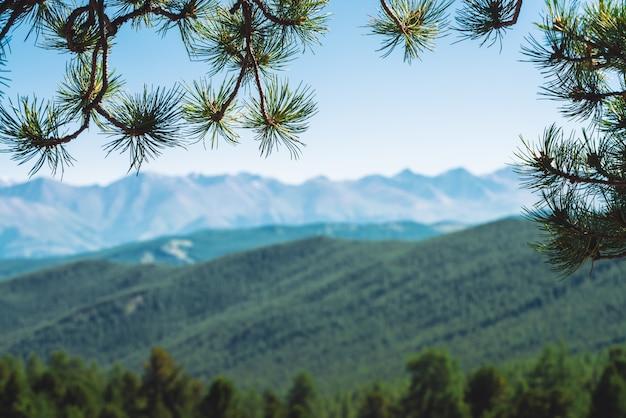 Zamazany widok gigantycznych gór i lodowców przez gałęzie drzew iglastych. śnieżna grań pod błękita jasnego nieba w bokeh. szczyt śniegu w górach. niesamowite atmosferyczne minimalistyczne górski krajobraz rama tło