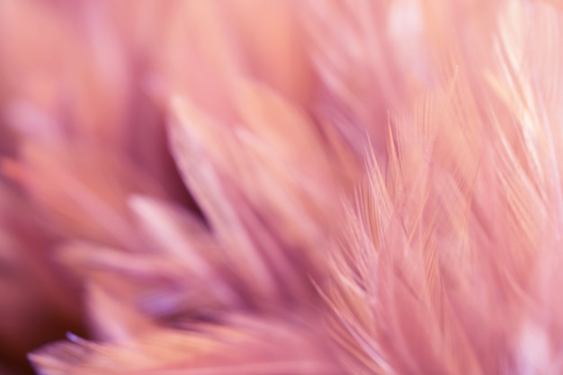 Zamazuje ptasich kurczaków piórkową teksturę dla tła