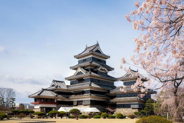 Zamek matsumoto podczas kwitnienia wiśni jest jednym z najbardziej znanych zabytków w matsumoto, nagano, japonia.