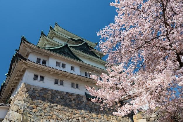 Zamek nagoya i kwitnąca biała sakura lub kwiat wiśni