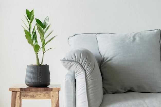 Zamioculcas zamifolia z sofą do koncepcji domu i ogrodu