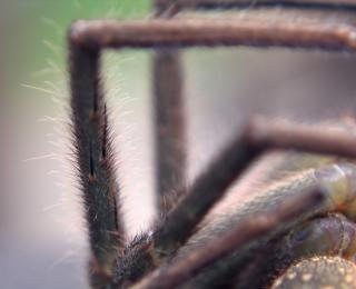 Zamknąć się nogi pająka