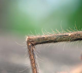 Zamknąć się z nogi pająka