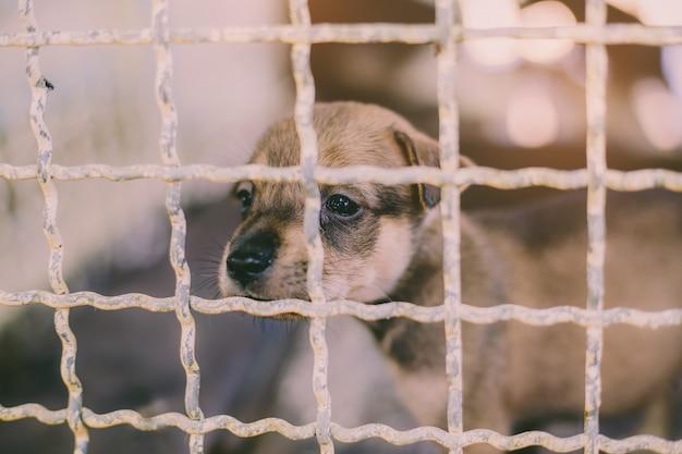 Zamknąć szczeniaka bezpańskiego psa, samotnego życia czekającego na jedzenie. opuszczony bezdomny bezpański pies leży w fundamencie. mały smutny zaniechany pies w klatce.