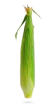 Zamknięte kolby kukurydzy zielony samodzielnie na białym tle ze ścieżką przycinającą. element projektu do etykiety produktu, druk katalogu.