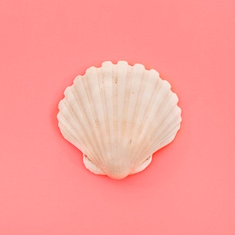 Zamknięty biały przegrzebek seashell na koralowym tle