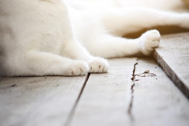 Zamknięty łapy biały kot.