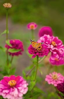 Zamknięty motyl na kwiatku -blur kwiat powierzchni.
