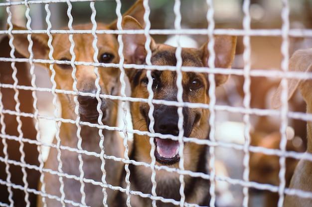 Zamknij bezpańskie psy. opuszczone bezdomne bezpańskie psy leżą na fundamencie.
