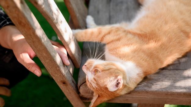 Zamknij i poddaj się kwarantannie w domu z kotem. odłącz się od społeczności i zostań w domu. bądź bezpieczny. zdrowie psychiczne i dobre samopoczucie. nowa normalność i życie po covid-19.