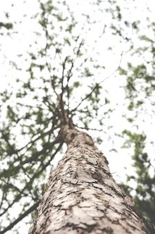 Zamknij i wyszczególnij sosnę, widok mrówek
