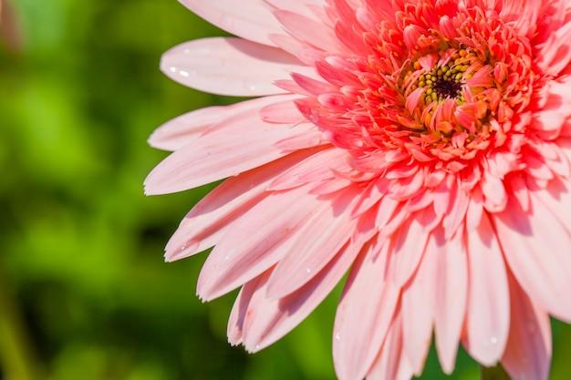 Zamknij makro kwiat