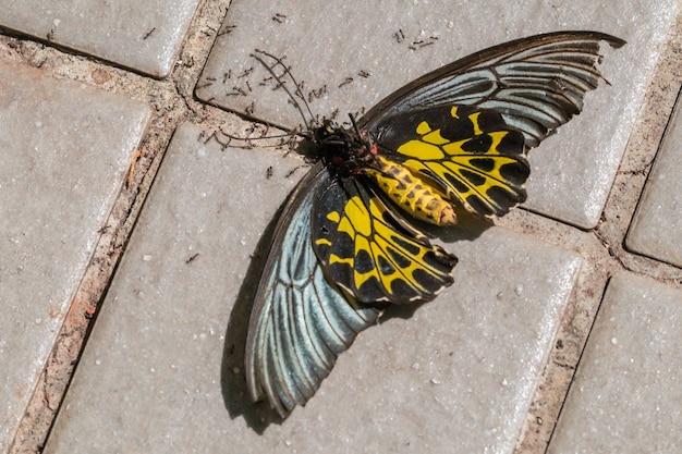 Zamknij martwego motyla na ziemi