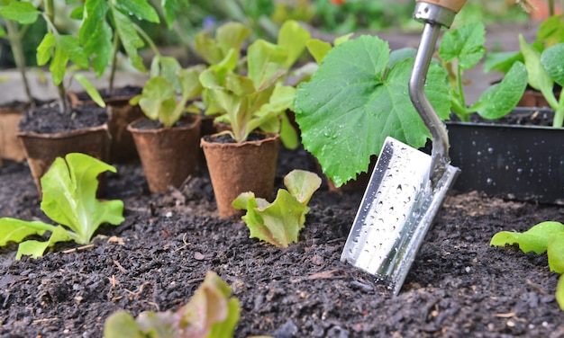 Zamknij na łopatę pokrytą kroplami sadzącymi w ziemi wśród liści sadzonek warzyw w doniczce torfowej