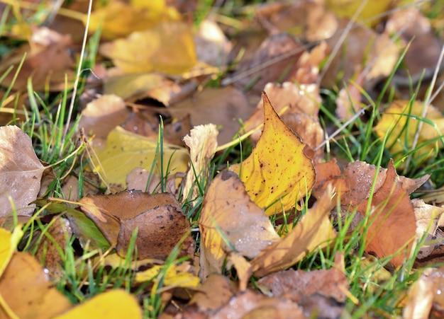 Zamknij na żółtych i brązowych liściach z jesiennymi kolorami na trawie