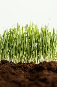 Zamknij naturalną glebę i trawę