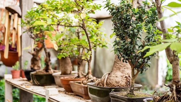 Zamknij rośliny w ogrodzie