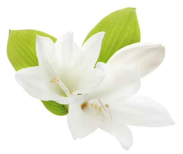 Zamknij się białe lilie z liśćmi
