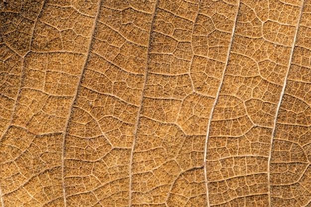 Zamknij się detial brązowe suchej tekstury liści