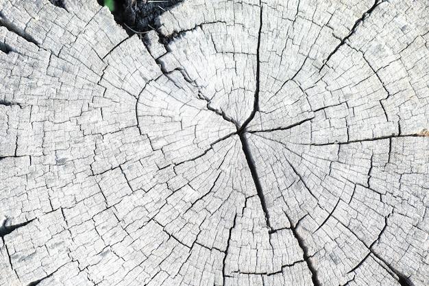 Zamknij się drewniany kikut okrągłe wyciąć drzewo z rocznymi pierścieniami jako tekstury drewna