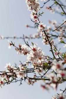 Zamknij się gałęzie drzew z kwitnącymi kwiatami