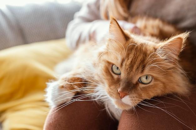 Zamknij się kot siedzi na właścicielu