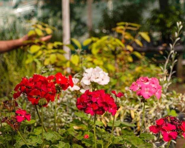 Zamknij się kwiaty w ogrodzie
