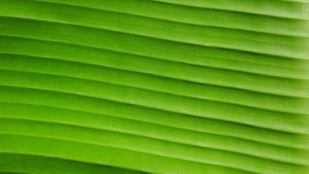 Zamknij się linie zielone liście banana